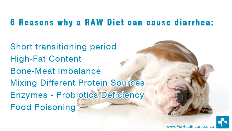 Groovy 6 Reasons That Will Cause Diarrhea In Raw Eating For Dogs Beatyapartments Chair Design Images Beatyapartmentscom