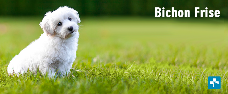 Hypoallergenic Dog Breeds For People Suffering From