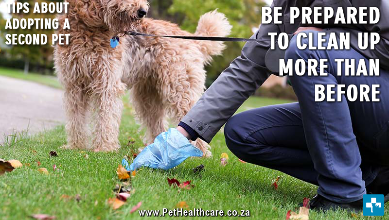Tips Adopting a second pet, trained pets, dog training, poop scooping, cleaning, medical bills, veterinary care, more expenses, pet food cost,