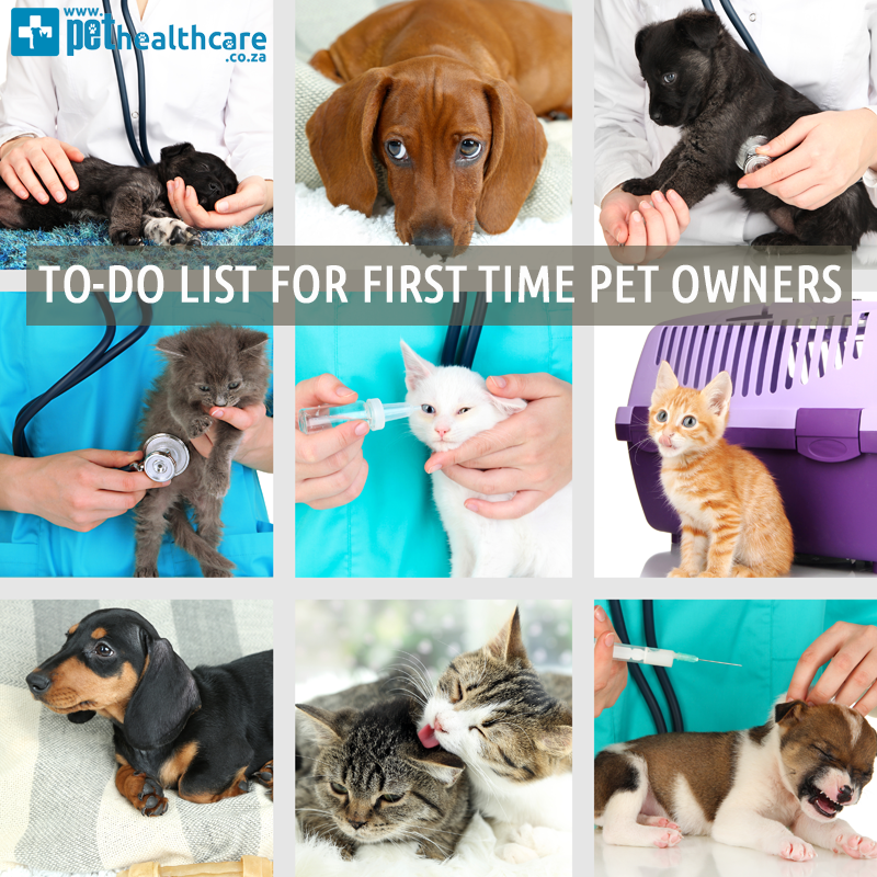 First time pet owners, First time home owner, getting a new puppy, pet insurance advice, pet insurance tips, veterinary care cost, pet emergency information, home check list for pets, safety checklist for pets,