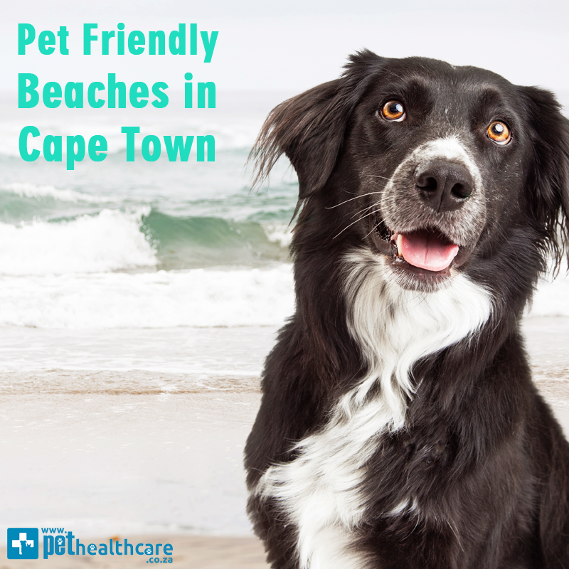 Pet friendly beaches in Cape Town