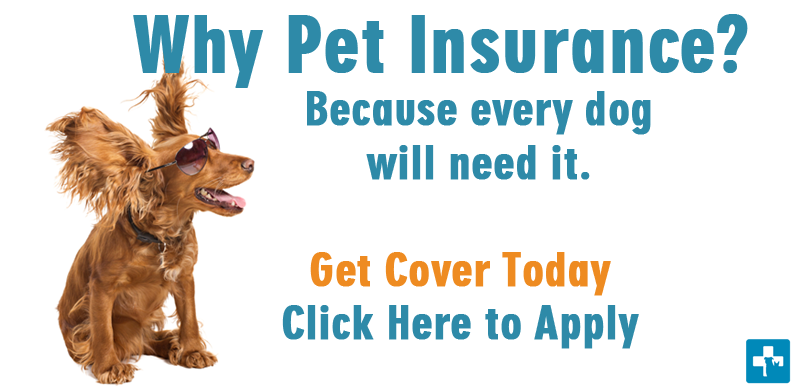 Why-no-bones-for-dogs-pet-healthcare-Pet-Insurance-Cover-for-dogs-and-cats