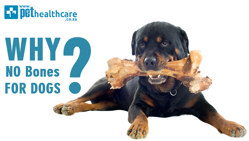 why no bones for dogs pet insurance pet emergency pet healthcare