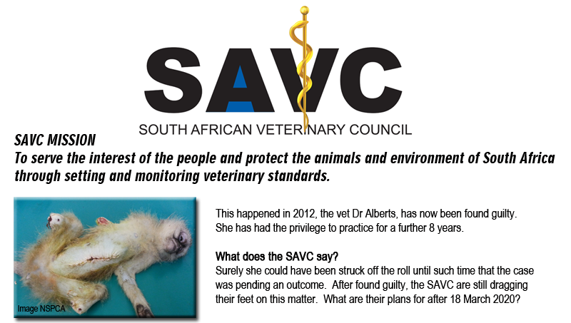 Mutilated Monkey kept alive, Dr Alfreda Alberts, SAVC, South African Veterinary Council, NSPCA, Guilty Animal Abuser, Veterinarian Abusing a monkey, Nigel Veterinarian