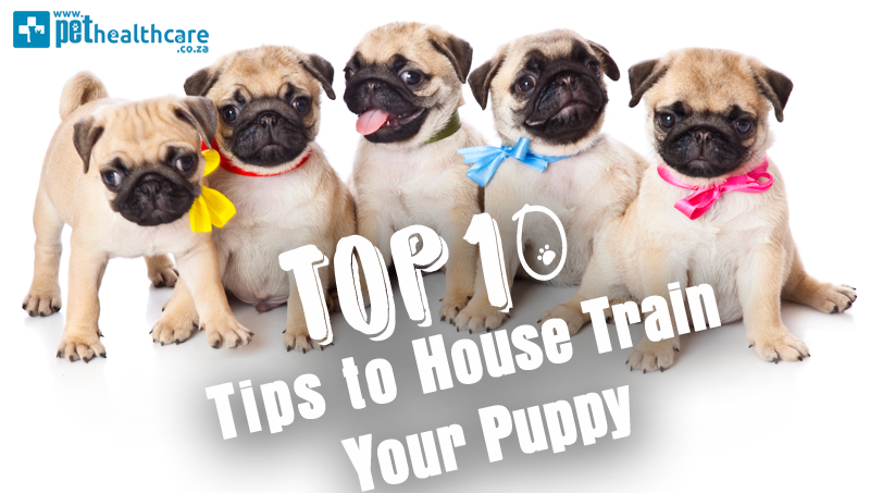 Top Ten Tips Puppy Training, House Training, Marathon Training, Classic music for dogs, Separation Anxiety, Pet Insurance, Barking Dog Problems, Reasons for a barking dog, Urine Mat, No Punishment Dog Training, Positive Dog Training, Pet Health Care