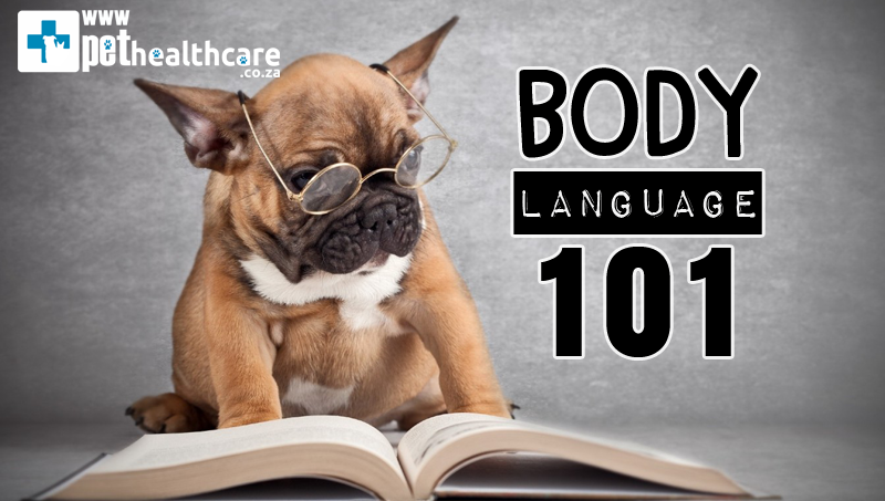 body language in dogs and cats, Pet Healthcare, pet insurance, animal behaviourist, friendly dog, friendly cat, aggressive dog, aggressive cat, pet communication, BODY LANGUAGE 101