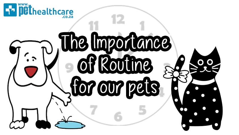 Routine is important for pets, Pet Healthcare, Pet Nutrition, Hills Pet Nutrition, Pet Insurance
