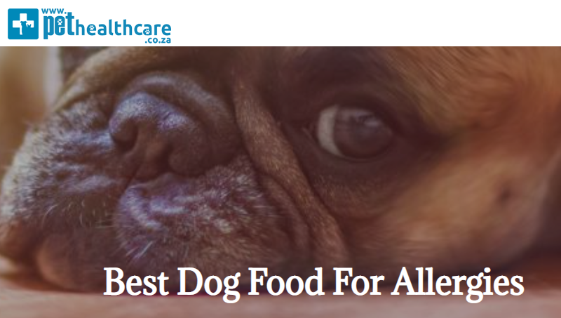 Best Dog Food, Skin Allergies, 2020, Top 10 Dry Foods, Healthy foods for pets, Pet Healthcare, Pet Advice