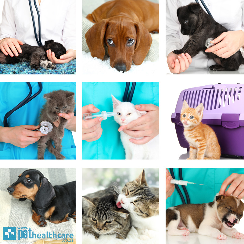 Celebrating World Veterinary Day in April with Pet Healthcare