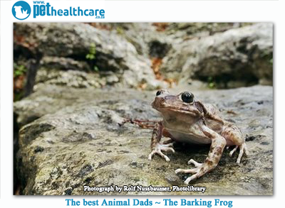 barking frog dad