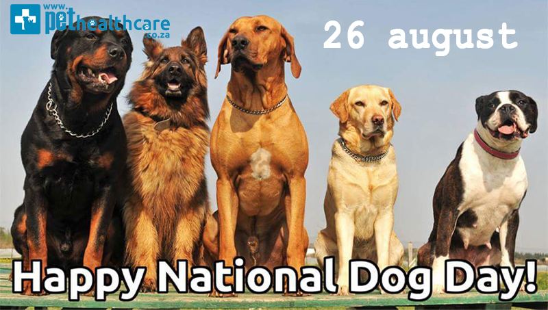 National Dog Day, 10 fun things to do, dog spoiling,