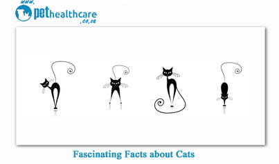 fascinating facts about Cats