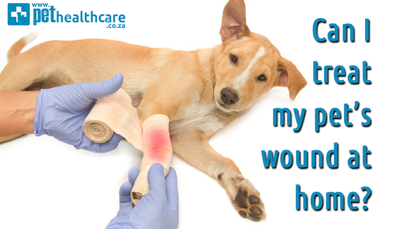 Wound Treatment for pets at home