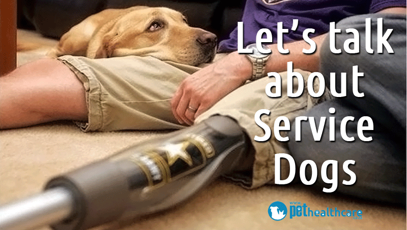 What Is A Service Dog Why They Are So