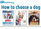15 questions how to choose a dog,