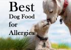 Best Dog Food, Skin Allergies, 2020, Top 10 Dry Foods, Pet Healthcare, Pet Advice