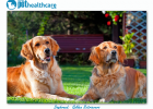 Top Dog breeds Golden Retriever