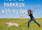 parkrun with your dog, leash training, harness training, halti no pull harness, benefits of a harness, the dangers of running your dog with a harness