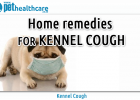 Kennel Cough Pet Health Care Bordetella virus home remedies