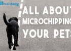 Microchip Options, Animal Health,  diere versekering, troeteldierversekering suid afrika, South Africa, Pet Health Care, Pet Care health, petcarehealth, pethealthcare, ask the vet, dieremaniere, animal behaviour, sick animals, siek diere, honde, katte, Cats, Dogs, veterinary advice, dog walks, dog events, pet wellness, kitten care health, pet carehealth insurance, pet insurance health, pet healthcare questions,