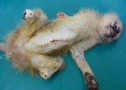 Vet maims monkey and keeps it alive