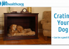dog crating., dieregesondheid, animal health, pet insurance, diere versekering, troeteldierversekering suid afrika, south Africa, Pet Health Care, pet care health, petcarehealth, pethealthcare, ask the vet, dieremaniere, animal behaviour, sick animals, siek diere, honde, katte, cats, dogs, veterinary advice, dog walks, dog events, pet wellness, kitten care health, pet care health insurance, pet insurance health, pet care news, pet health care questions, pet care health claim form, pet care health applicatio