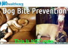 Pet Health Care Dog Bite Prevention Tips Dog bites child, dieregesondheid, animal health, pet insurance, diere versekering, troeteldierversekering suid afrika, south Africa, Pet Health Care, pet care health, petcarehealth, pethealthcare, ask the vet, dieremaniere, animal behaviour, sick animals, siek diere, honde, katte, cats, dogs, veterinary advice, dog walks, dog events, pet wellness, kitten care health, pet care health insurance, pet insurance health, pet care news, pet health care questions, pet care h