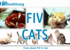 feline immunodeficiency virus FIV Cats