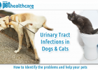 Pet Health Care Urinary Tract Infections