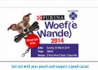 SPCA Cape Town, Woefie Wandel, Dog Walk,
