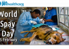 World spay day 25 February
