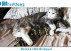 Roelien the cat and Likkie Leguaan rescue