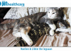 Roelien the cat and Likkie Leguaan rescue