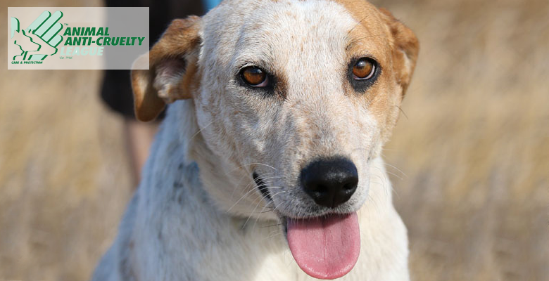 Town And Country Insurance >> ANIMAL ANTI-CRUELTY LEAGUE CAPE TOWN | Pet Health CareAnimal Anti-cruelty League Cape Town