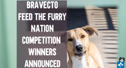 Bravecto, Tick Flea Prevention, Competition Winners, Richard Marr, AACL Ladysmith, MSD Animal Health, Feral Cat Assistance Garden Route, New Beginnings Bloemfontein, Oudtshoorn Dogs in Need, Soweto Animal Rescue & Advisory Centre, SARAC, AACL (Animal Anti-Cruelty League) in Cape Town, Cape of Good Hope SPCA (Society for the Prevention of Cruelty to Animals), Durban & Coast SPCA, CLAW (Community-Led Animal Welfare), FORA (Friends of Rescued Animals), Funda Nenja (Learning with the Dog), PDSA (The Peoples Dis