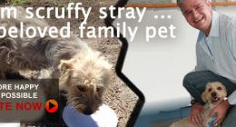 From Scruffy stray to beloved family pet, dieregesondheid, animal health, pet insurance, diere versekering, troeteldierversekering suid afrika, south Africa, Pet Health Care, pet care health, petcarehealth, pethealthcare, ask the vet, dieremaniere, animal behaviour, sick animals, siek diere, honde, katte, cats, dogs, veterinary advice, dog walks, dog events, pet wellness, kitten care health, pet care health insurance, pet insurance health, pet care news, pet health care questions, pet care health claim form