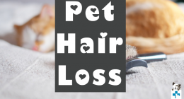 Pet Hair Loss, Control for Pets, Pet Healthcare, Hills Pet Nutrition