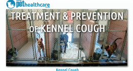 Kennel Cough Pet Health Care Bordetella virus