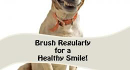 Pets, Dental Health, Finger mouth brush, teeth care, oral health, scaling, plaque removal