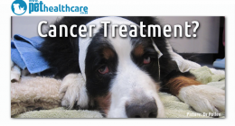 cancer treatment for pets