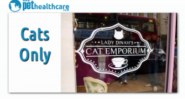 Cat Emporium London