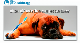Pet Dental Health, dieregesondheid, animal health, pet insurance, diere versekering, troeteldierversekering suid afrika, south Africa, Pet Health Care, pet care health, petcarehealth, pethealthcare, ask the vet, dieremaniere, animal behaviour, sick animals, siek diere, honde, katte, cats, dogs, veterinary advice, dog walks, dog events, pet wellness, kitten care health, pet care health insurance, pet insurance health, pet care news, pet health care questions, pet care health claim form, pet care health appli