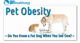 Fat pets. dieregesondheid, animal health, pet insurance, diere versekering, troeteldierversekering suid afrika, south Africa, Pet Health Care, pet care health, petcarehealth, pethealthcare, ask the vet, dieremaniere, animal behaviour, sick animals, siek diere, honde, katte, cats, dogs, veterinary advice, dog walks, dog events, pet wellness, kitten care health, pet care health insurance, pet insurance health, pet care news, pet health care questions, pet care health claim form, pet care health application fo