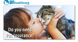 Pet Insurance South Africa Pet Health Care PAWPAW