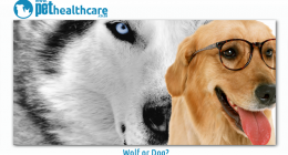 Pet Health Care Wolf or Dog Vondis Dingo Fox Jackal Coyote