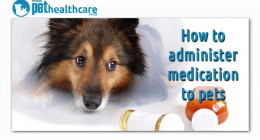 How to administer Pet Medication, Tips to give your pet medication, dieregesondheid, animal health, pet insurance, diere versekering, troeteldierversekering suid afrika, south Africa, Pet Health Care, pet care health, petcarehealth, pethealthcare, ask the vet, dieremaniere, animal behaviour, sick animals, siek diere, honde, katte, cats, dogs, veterinary advice, dog walks, dog events, pet wellness, kitten care health, pet care health insurance, pet insurance health, pet care news, pet health care questions,