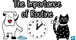 Routine is important for pets, Pet Healthcare, Pet Nutrition, Hills Pet Nutrition, Pet Insurance