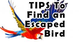 Finding an escaped bird, Bird Rescue, Parrot Rescue, Exotic Bird Rescue, Pet Insurance, Pet Healthcare,