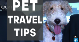 Tips for Travelling with your pets,  Pets on holiday, Pet friendly destinations, Pet Health Care, Pet Insurance Tips,