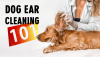 Ears, Dog Ears, Clean ears, Ear Cleaning, Best Ear Cleaning Advice, DIY Dog Ear Cleaning, Tips from a Vet, Pet Healthcare
